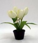 . Chậu hoa tulip PS00255