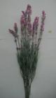 Cành hoa tím FY10(hết hàng)