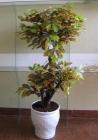 Cây lá xanh T11 P0046