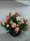'Chậu sorel hoa hồng tú cầu G002003