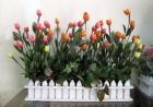 Hàng rào tulip 40cm P0048 (hết hàng)