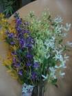 Hoa đầu xuân FEM17(hết hàng)