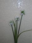 Hoa bông tuyết F000001 (hết hàng)