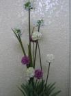 .Hoa cúc cầu Canada F000121