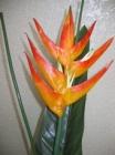 Hoa chuối F000202 (hết hàng)