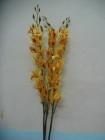 .Hoa lan bướm F000694-1