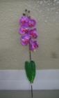 Hoa lan tím 1N F000672 (hết hàng)