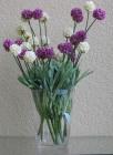 Hoa cúc cầu(Hết hàng)